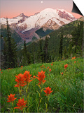 Sunrise with the Moon over Mount Rainier with Paintbrush (Castilleja) Flowers in the Meadow