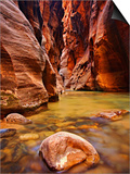 Virgin River Narrows Glows with Reflected Morning Light  Zion National Park  Utah  USA