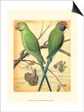 Cassell's Parrots III