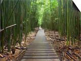 Boardwalk Trail Through a Bamboo Forest on Maui  Hawaii  USA