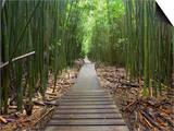 Boardwalk Trail Through a Bamboo Forest on Maui  Hawaii  USA
