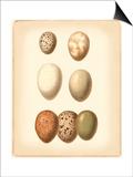 Bird Egg Study II