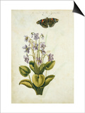Botanical Study of a Violet