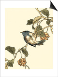 Oriental Bird on Branch III