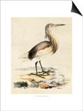 Antique Heron I