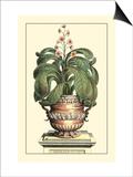 Antique Munting Aloe II