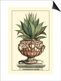 Antique Munting Aloe IV