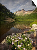 A Spring Bouquet of Aspen Daisies Decorates the Maroon Lake Shoreline