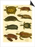 Oken Tortoise