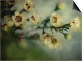 Flowers Strewn
