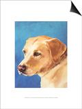 Dog Portrait  Yellow Lab