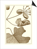 Cropped Sepia Botanical I