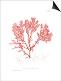 Nature Print in Coral IV