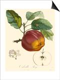 Bessa Apples