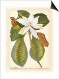 Magnificent Magnolias II