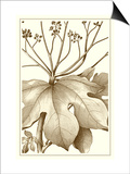 Cropped Sepia Botanical VI