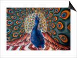 India: Peacock