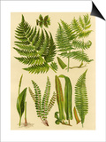 Fern Collection I