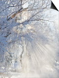 Sunbeams Through Branches Covered with Hoar Frost