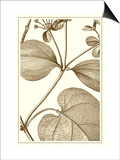 Cropped Sepia Botanical V