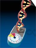Biomedical Illustration of a DNA Molecule on a Bathroom Scale Illustrating
