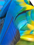 Feathers of a Blue and Gold Macaw  South America