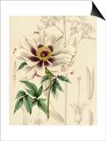 Floral Pairings II