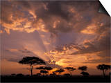 Crepuscular Sun Rays and Acacia Trees at Twilight  Masai Mara Game Reserve  Kenya  Africa