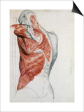 Human Anatomy  Muscles of the Torso and Shoulder