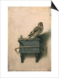 The Goldfinch  1654