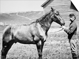 Comanche  Captain Keogh's Mount  the Only Survivor of Custer's Last Stand  25th June 1876