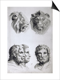 Similarities Between the Head of a Lion and a Man