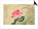 Lotus Flower  by Yun Shou-P'Ing (1633-90)  from an 'Album of Flowers'  (W/C on Silk Backed Paper)