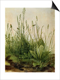 Great Piece of Turf - Study of Weeds  1503 (W/C and Bodycolour on Vellum)