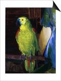 Parrot  1915