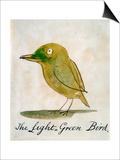 The Light Green Bird  from Sixteen Drawings of Comic Birds