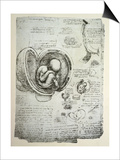 The Human Foetus in the Womb  Facsimile Copy