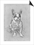 Bouboule'  the Bulldog of Madame Palmyre at La Souris  1897