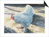 Blue Bird  1986