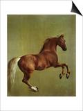 Whistlejacket  1762