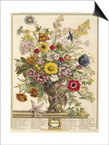 November  from 'twelve Months of Flowers' by Robert Furber (C1674-1756) Engraved by Henry Fletcher