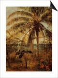 Palm Tree  Nassau  1892