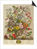 May  from 'twelve Months of Flowers' by Robert Furber (C1674-1756) Engraved by Henry Fletcher