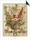 December  from 'twelve Months of Flowers' by Robert Furber (C1674-1756) Engraved by Henry Fletcher