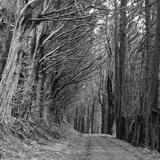 Trees along Sandymount Track  New Zealand