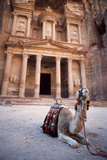 Camel Sitting at the Entrance to the Iconic Ruins at Petra  Jordan