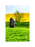 Natural Meadow Landscape and Abstract of Stones - Pewsey - Wiltshire - UK - England
