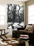 Wall Mural - Natural Shadows of Trees in Central Park in Winter - Manhattan - New York - USA
