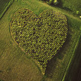 England Aerial View  Heart Orchard  Near Huish Hill