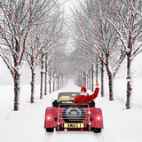 Avenue of Trees with Father Christmas Driving